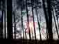 Sonne im kargen Wald